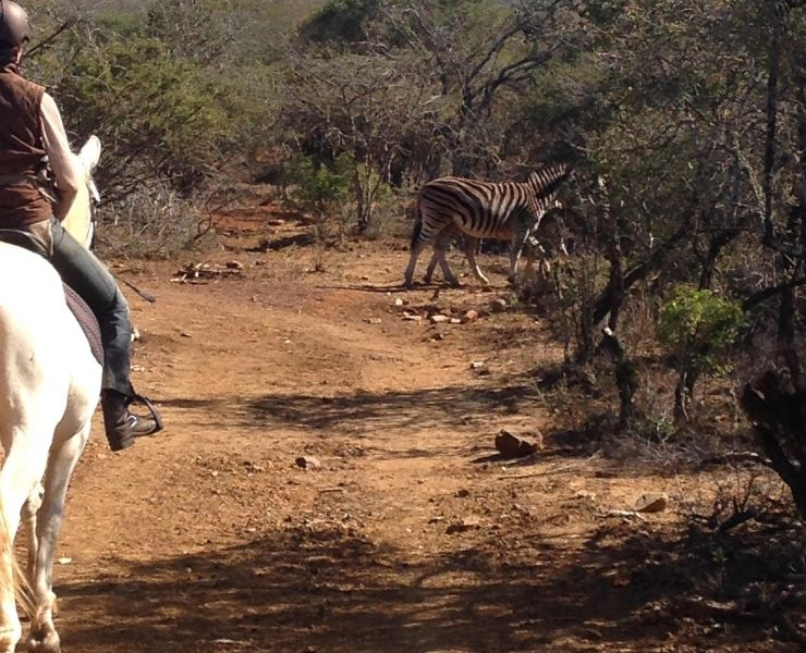 Best games lodges in South Africa featured by top international travel blogger, Tracy's Travels in Time