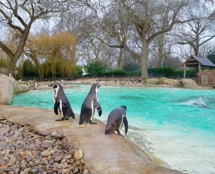 Penguins at London Zoo
