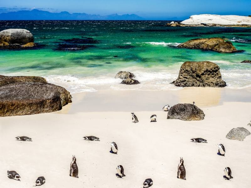 Beach with boulders and penguins