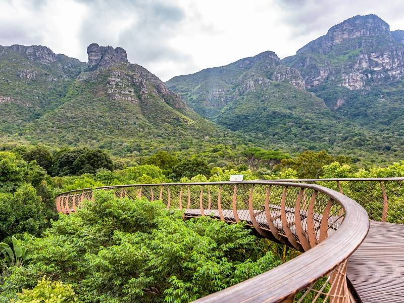 Kirstenbosch Walkway through the gardens with Table Mountain in the background
