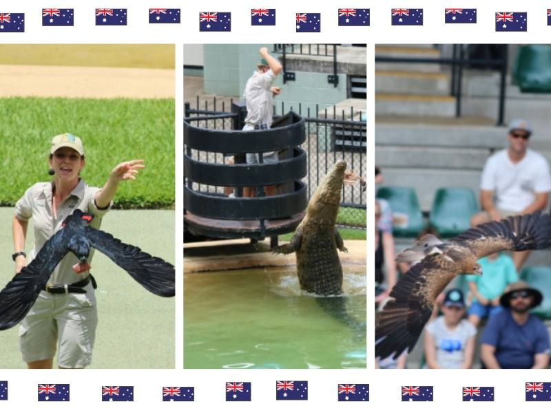 3 pictures in a collage showing scenes from Australia Zoo including a crocodile being fed and 2 birds in the bird show
