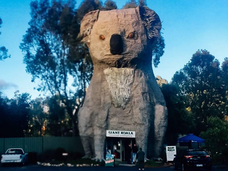 The Big Koala in Australia is one of Australia's big things
