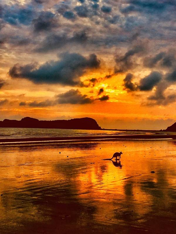 Kangaroo on a beach at sunrise