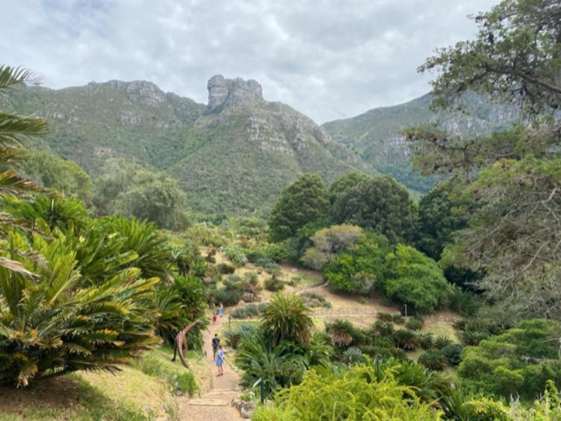 A view of Kirstenbosch Botanical Gardens in South Africa