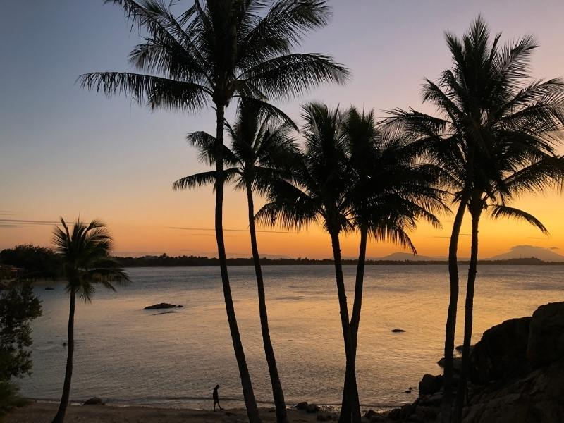 Sunset with palm trees overlooking a beach