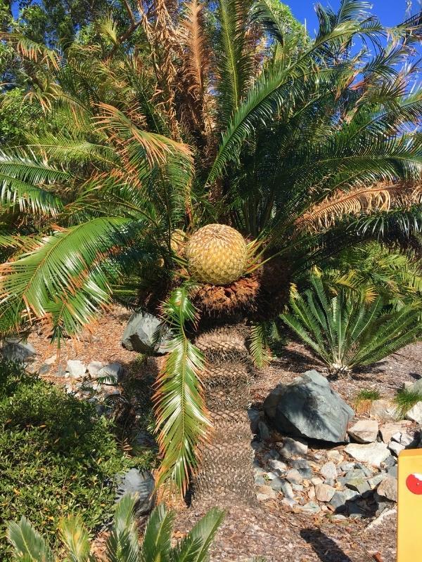 Botanical Gardens Mackay.